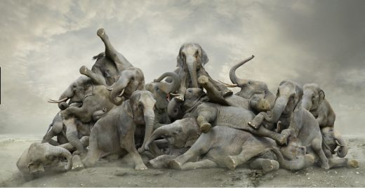Koen-Demuynck-elefantes