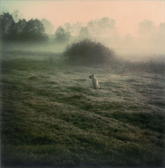 Fotografías de Tarkovsky
